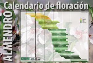 Calendario floracion almendro